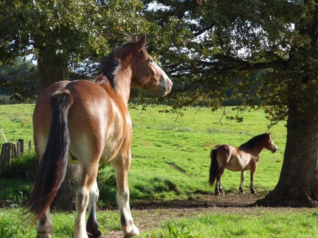 comprendre votre cheval ethologie