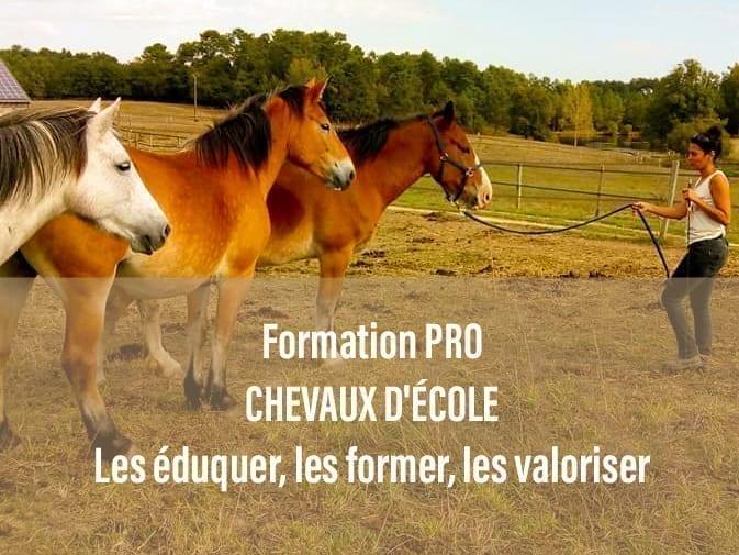 CHEVAUX D'ÉCOLE