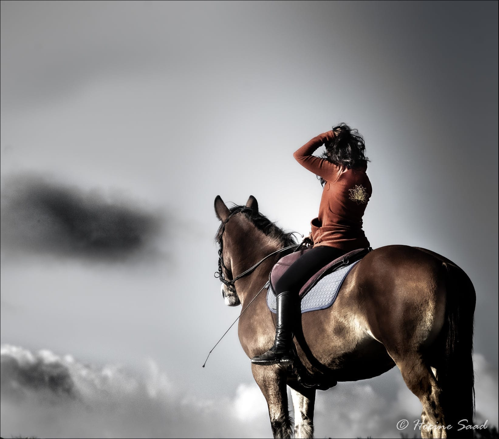 penjab cavaliere equitation conscience ensemble